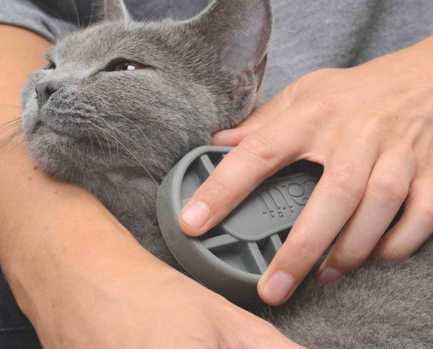 British Shorthair cat enjoys being brushed with the Rubber Palm Brush