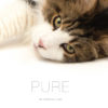 M5047 - Pure Cat Book_crop