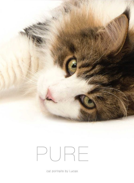 Cover of Pure Cat Book with picture of cat lying down