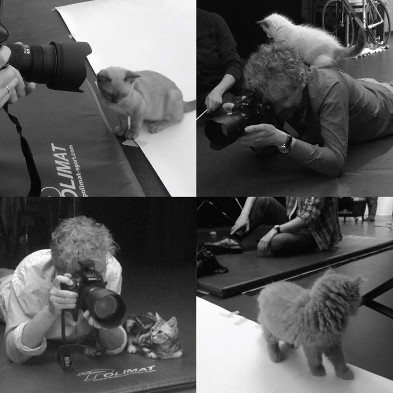 Pictures of photo shoot with kittens
