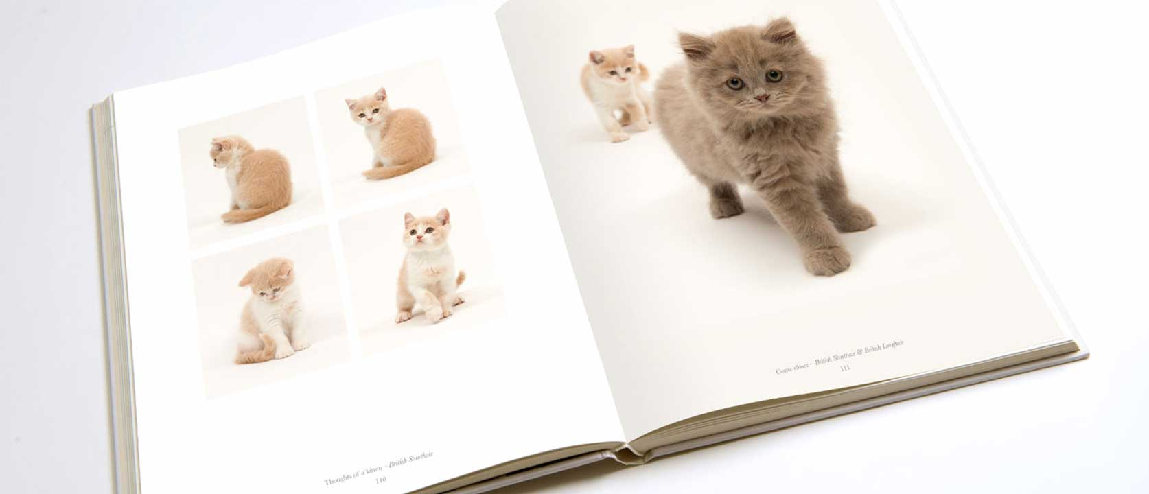 Open Pure Cat Book showing pictures of cute little kittens