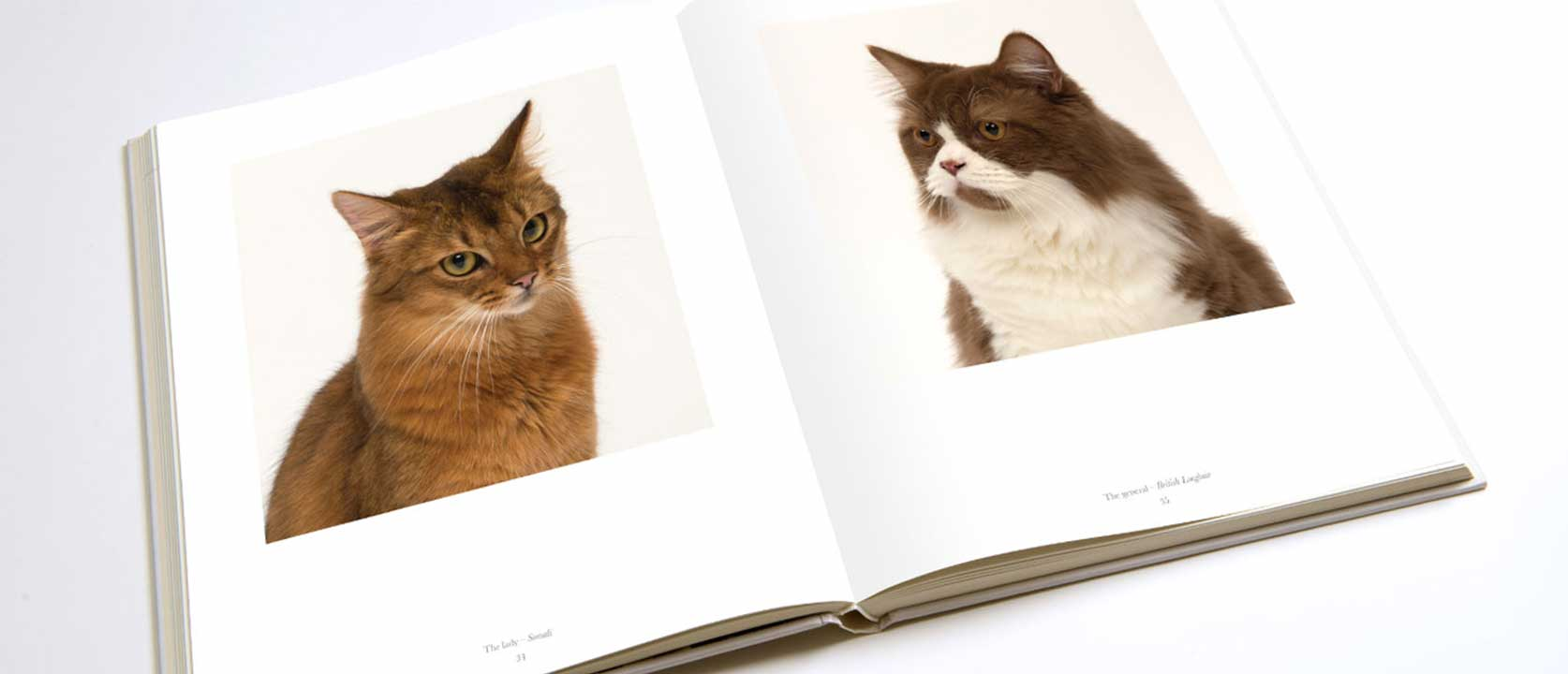 Open Pure Cat Book showing pictures of cats