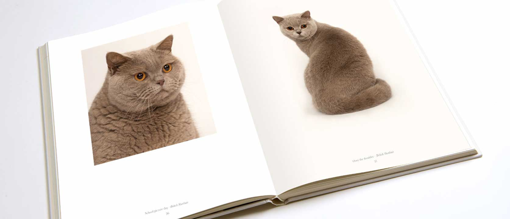 Open Pure Cat Book with pictures of British Shorthair cat