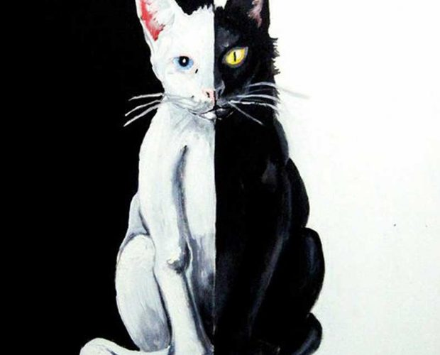 Painting of a cat which is half white, half black