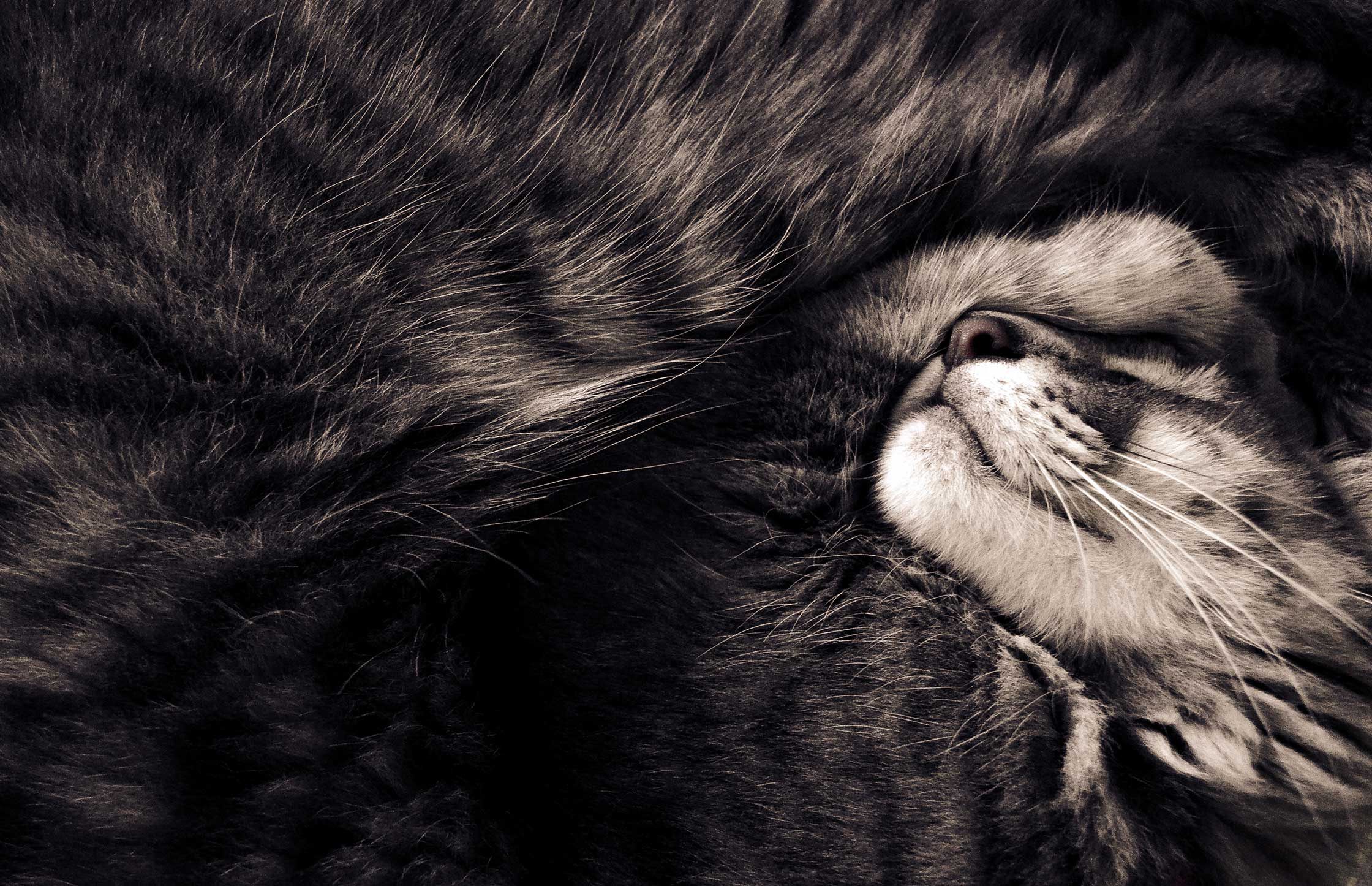 Beautiful picture of a cat by Agustina Pasqualis