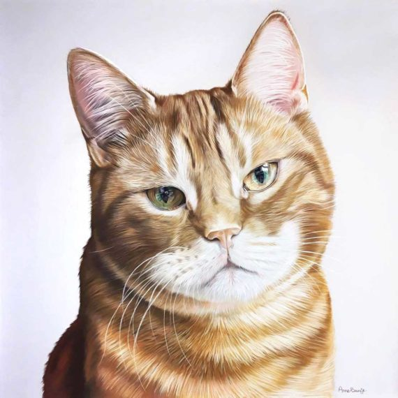 Drawing of a ginger cat by Anne Baukje Oord