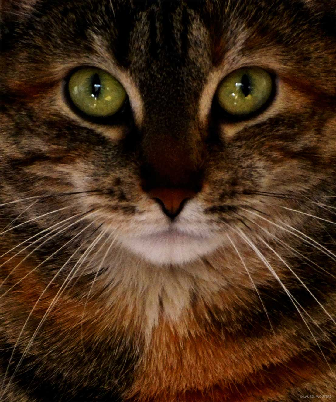 Close-up frontal portrait of a cats face by Lauren Wouters