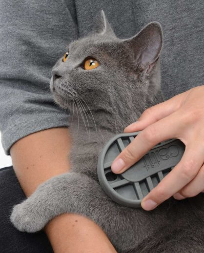 British Shorthair cat being combed with Rubber Palm Brush