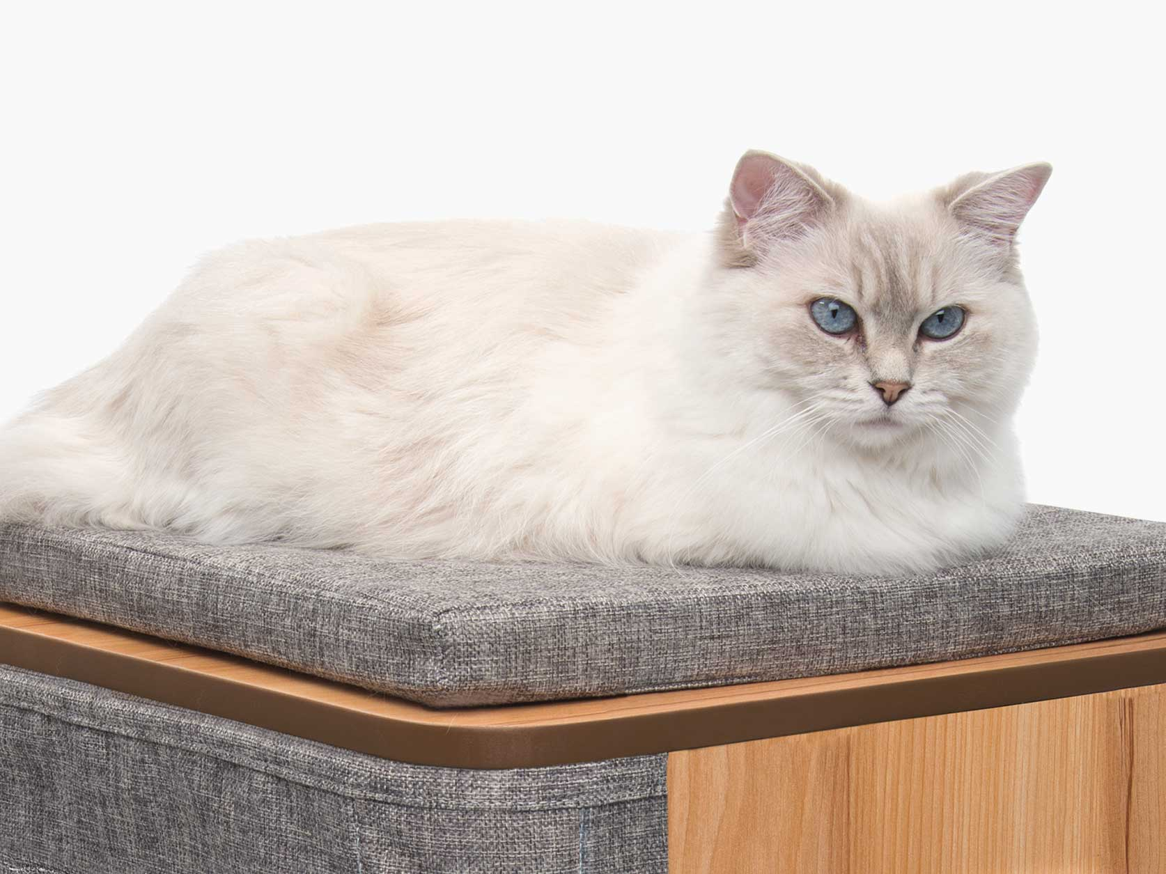 White blue-eyed cat lounging on the memory foam cushion of the Vesper Cubo