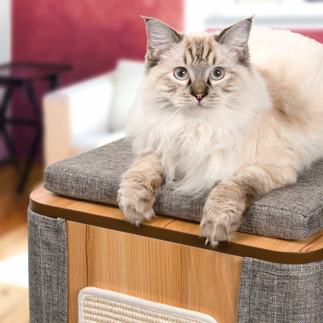 Ragdoll relaxing on a Vesper Cubo Tower