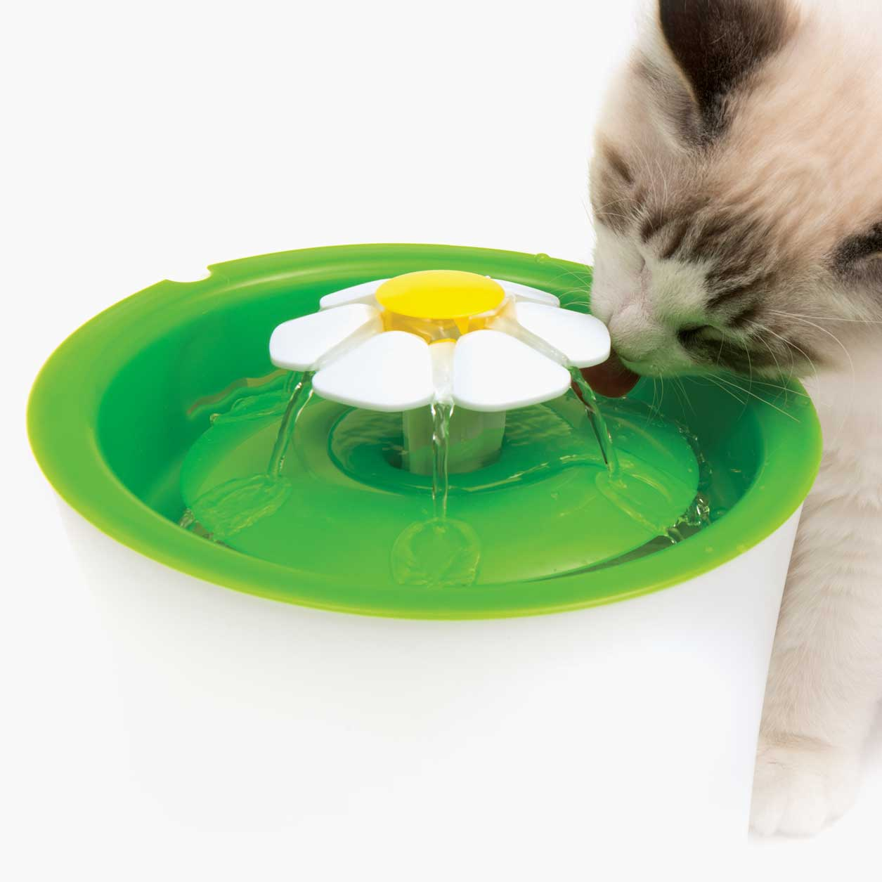 Cat drinking filtered water from the Catit Flower Fountain