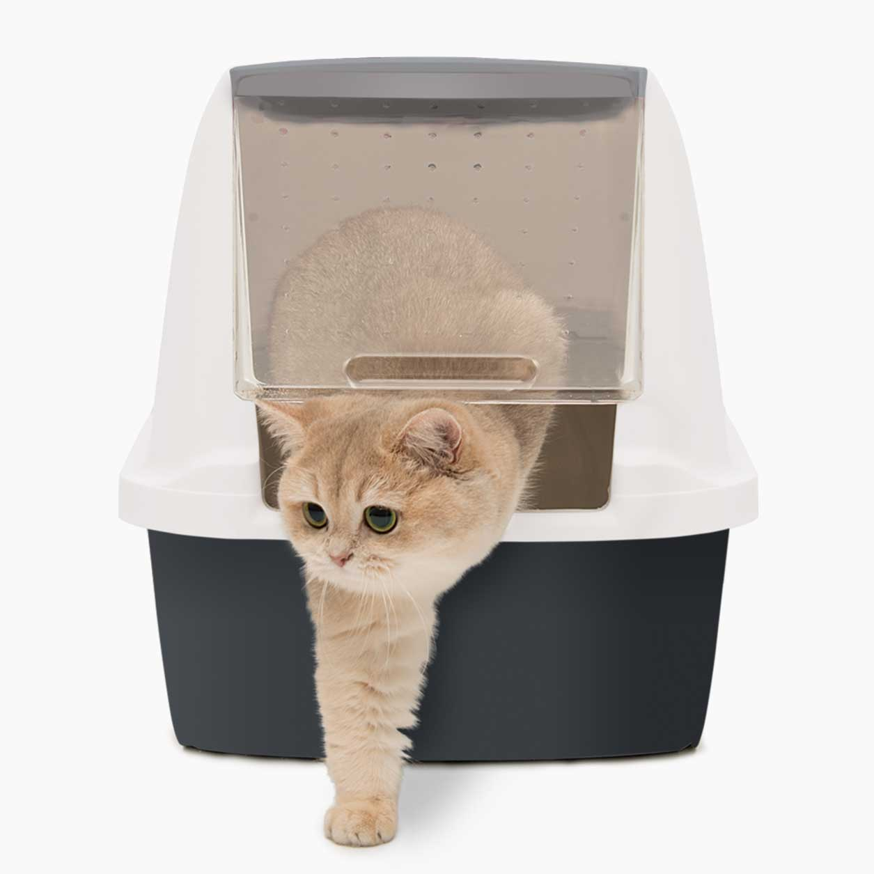 Cat coming out of the Litterbox Regular