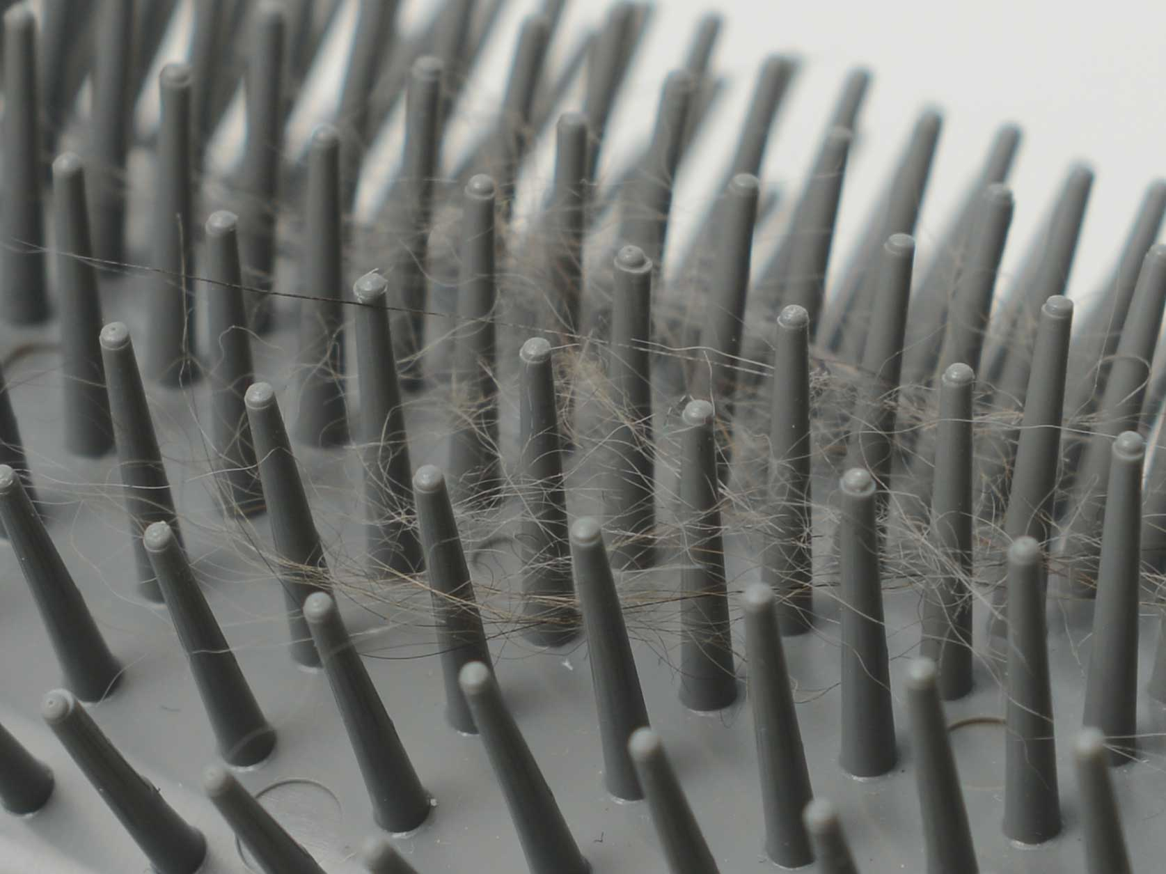 Close up of cat hairs in the Senses 2.0 Self Groomer