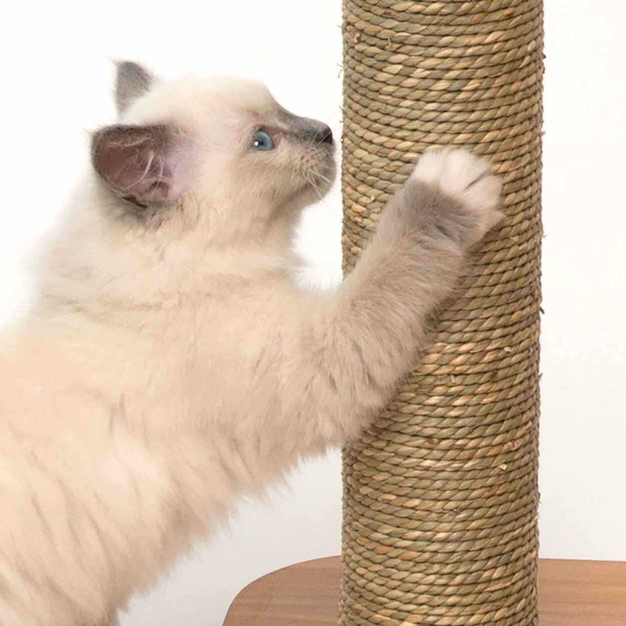 Kitten scratching the seagrass scratching post of the Vesper Base