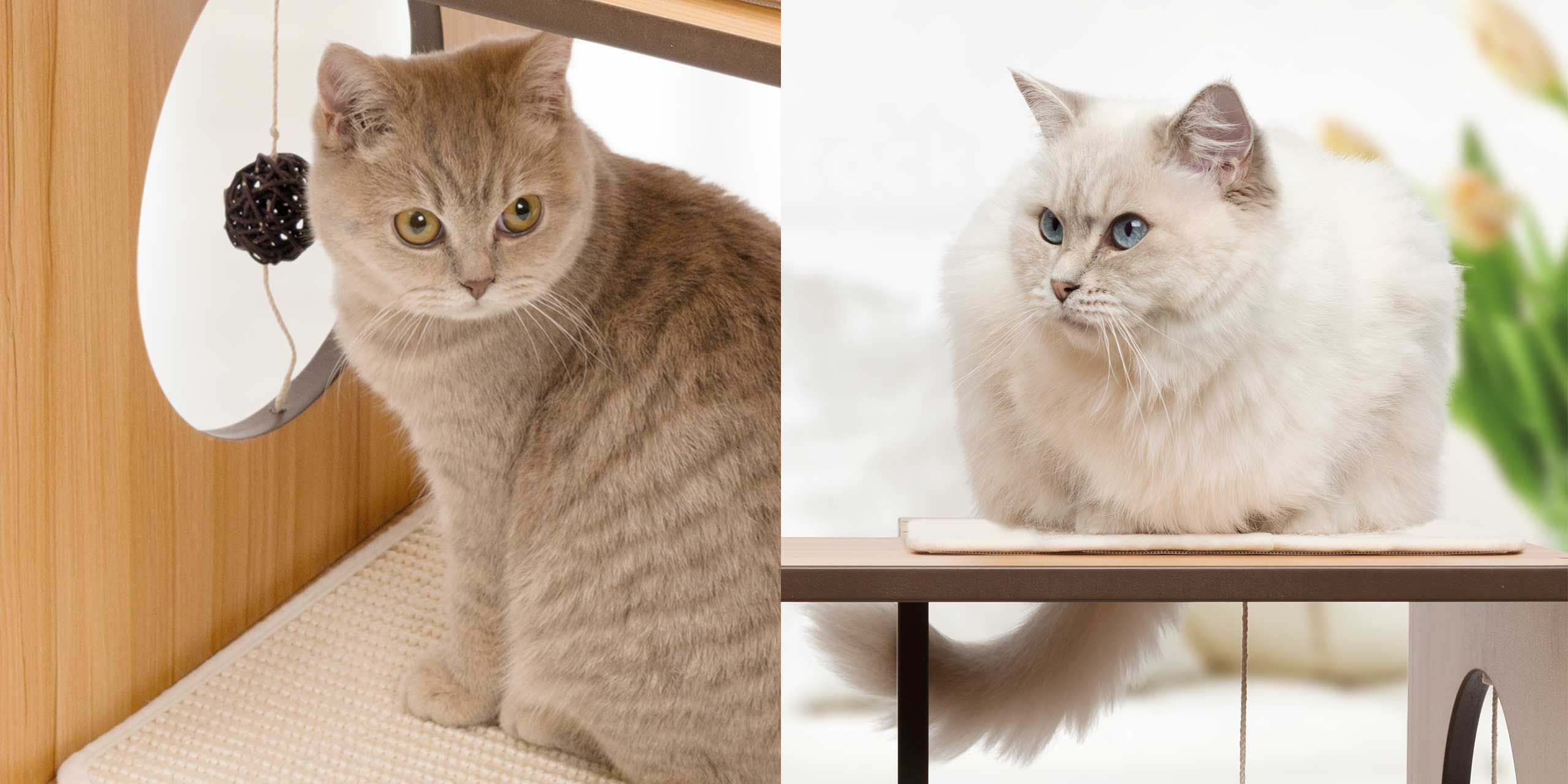 Two pictures of cats on a vesper furniture