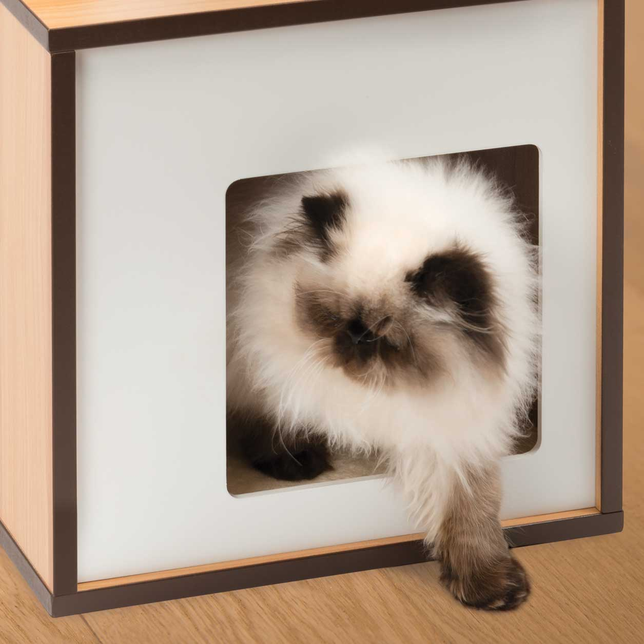 Long haired cat stepping out of the Vesper Box small