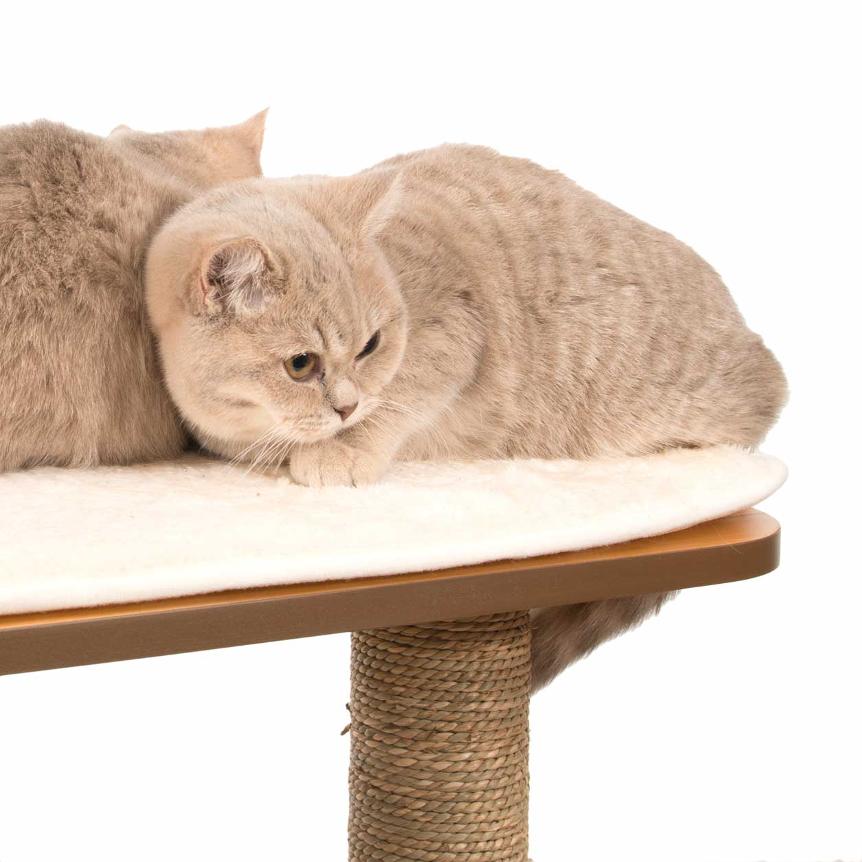 Beautiful cats relaxing on memory foam cushion on top of the Vesper High Base