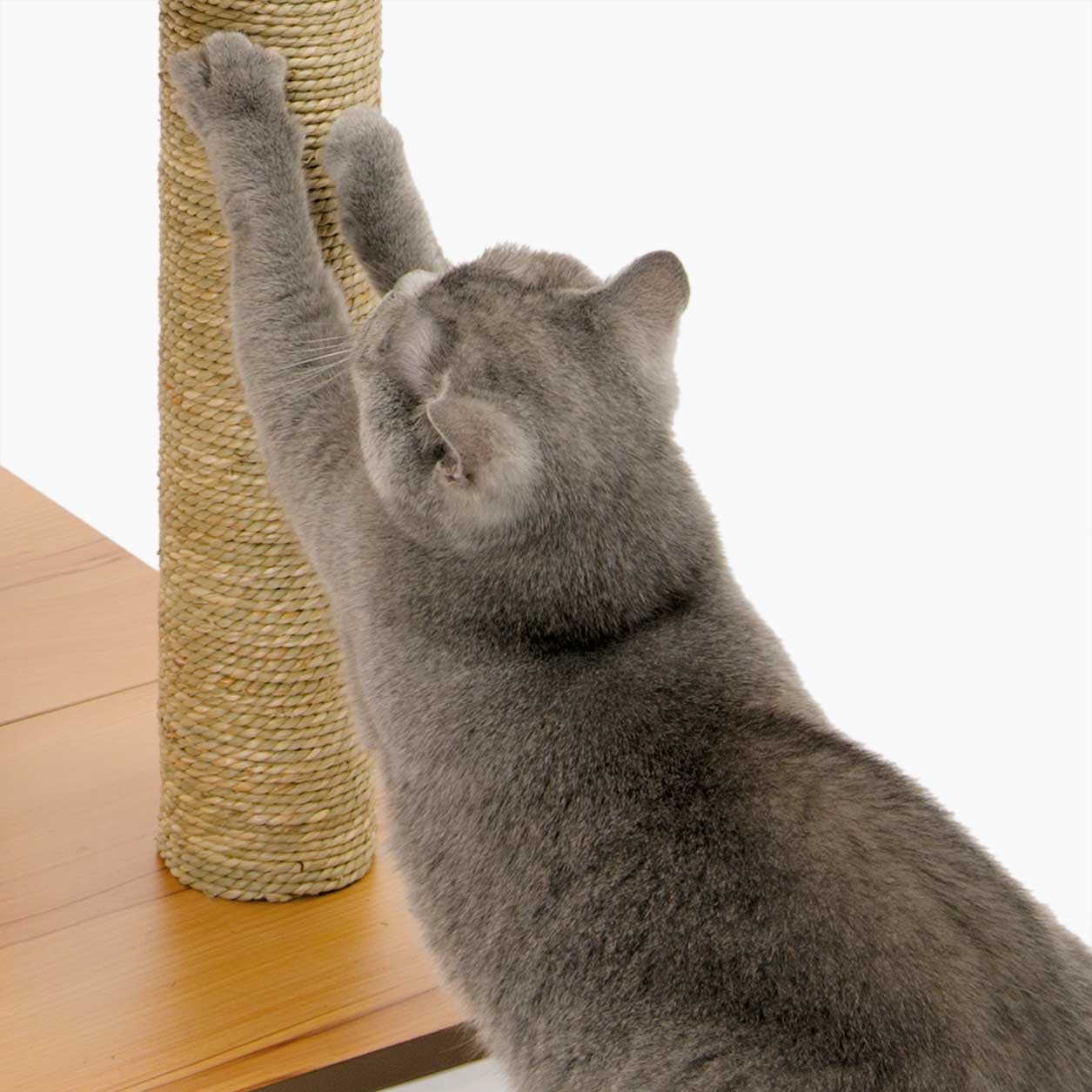 Cat scratching paws on the Vesper High Base seagrass scratching post