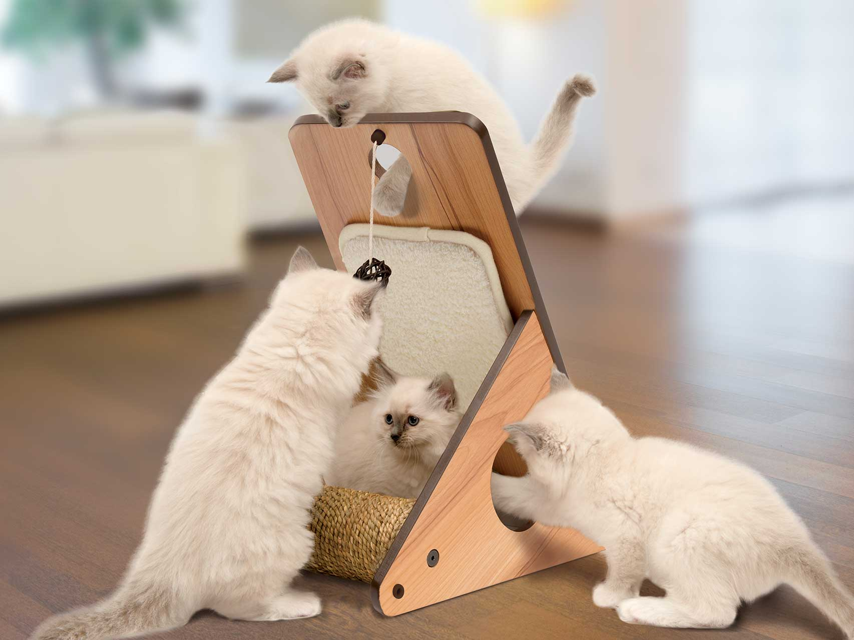 Kittens playing on a Vesper Play Center