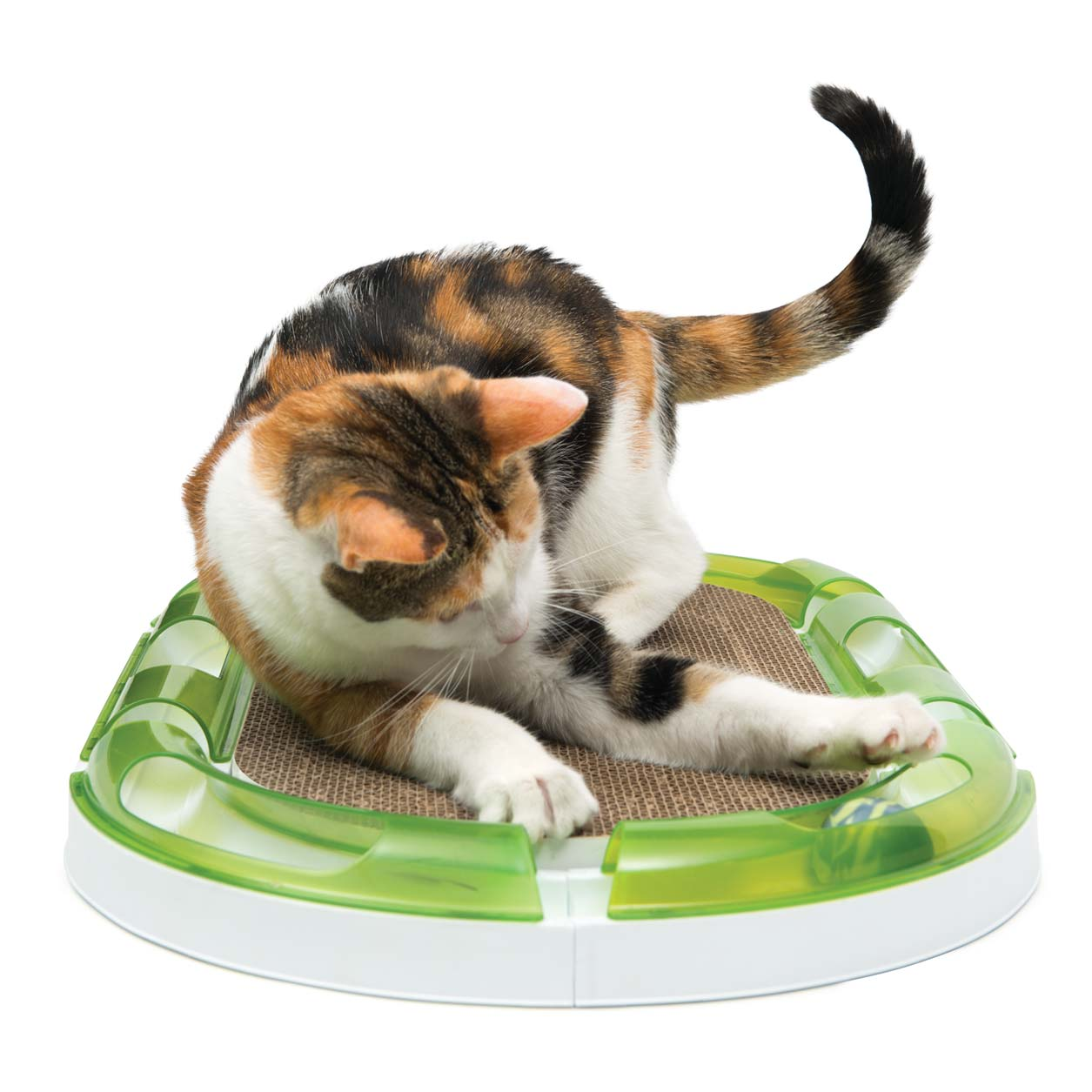 Pixi playing with the senses 2.0 circtuit on the oval scratcher