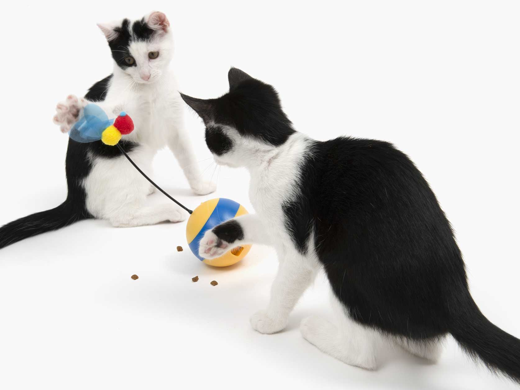 Cats playing grabbing treats from the spinning bee