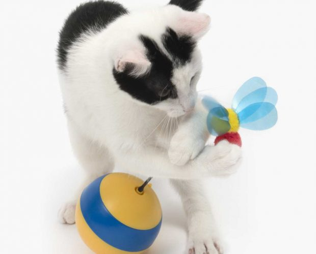 Cat playing with spinning bee cat toy
