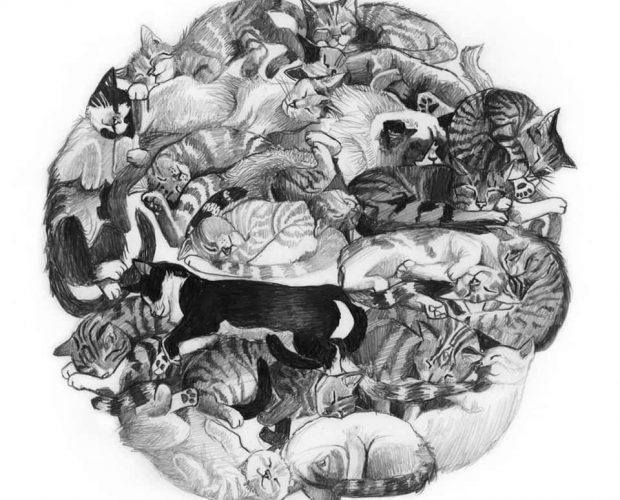 Becky McEwen cat art contest nominee for drawing
