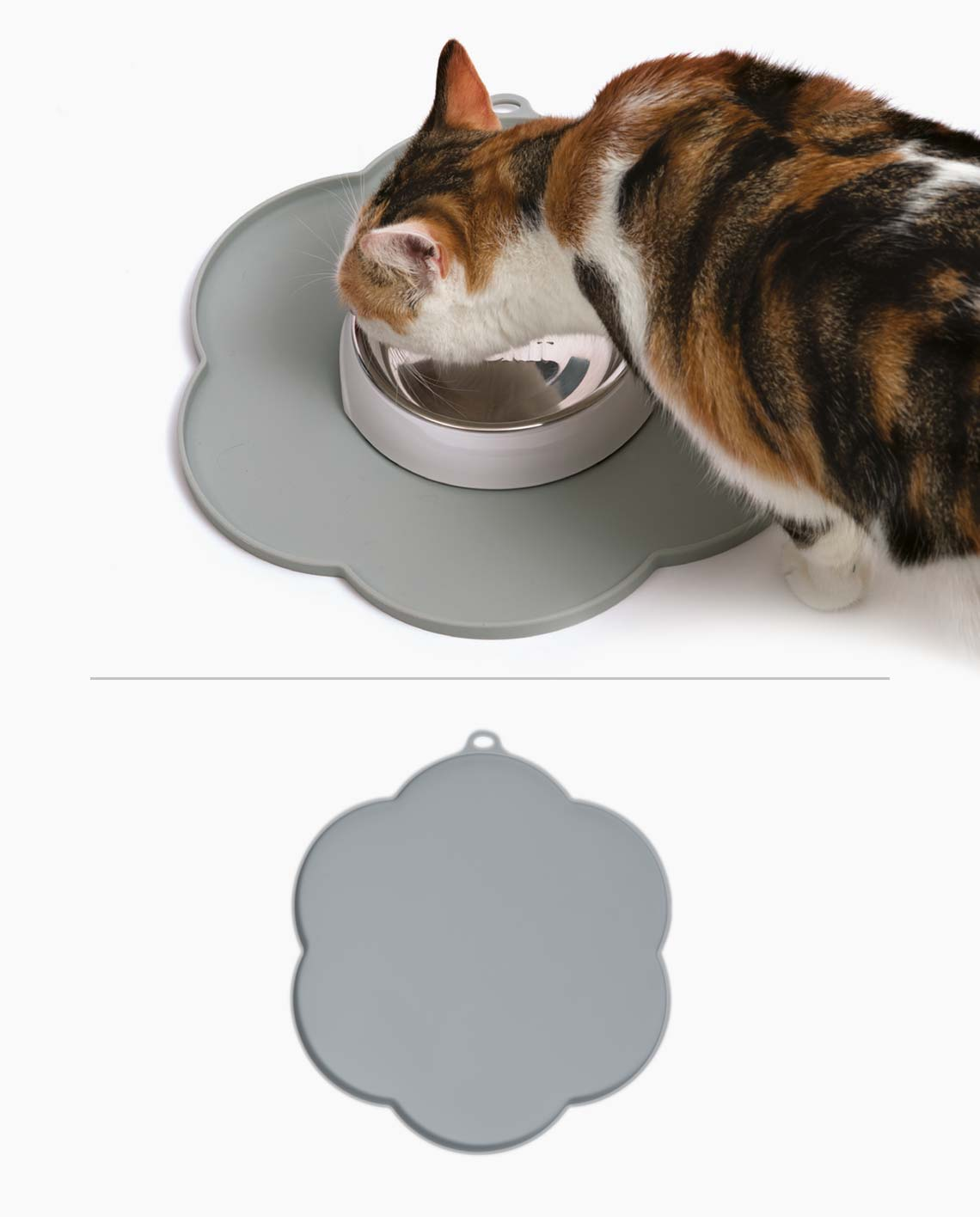Pixi eating from a dish with a flower placemat