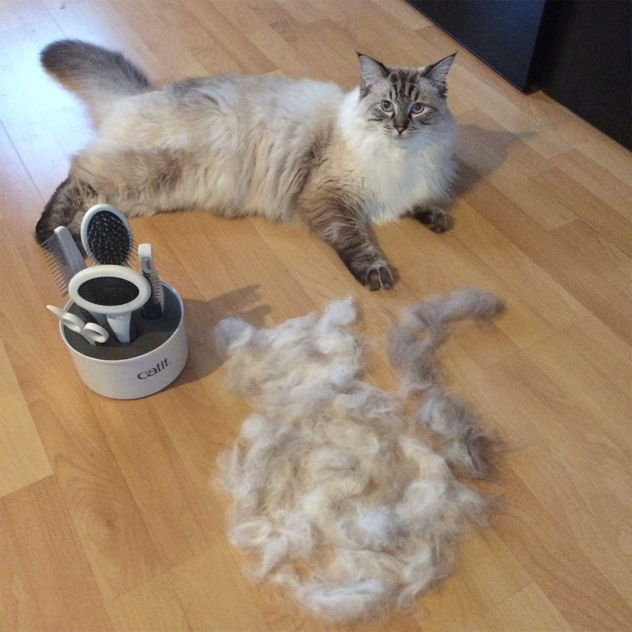 Cat after being groomed by the grooming kit