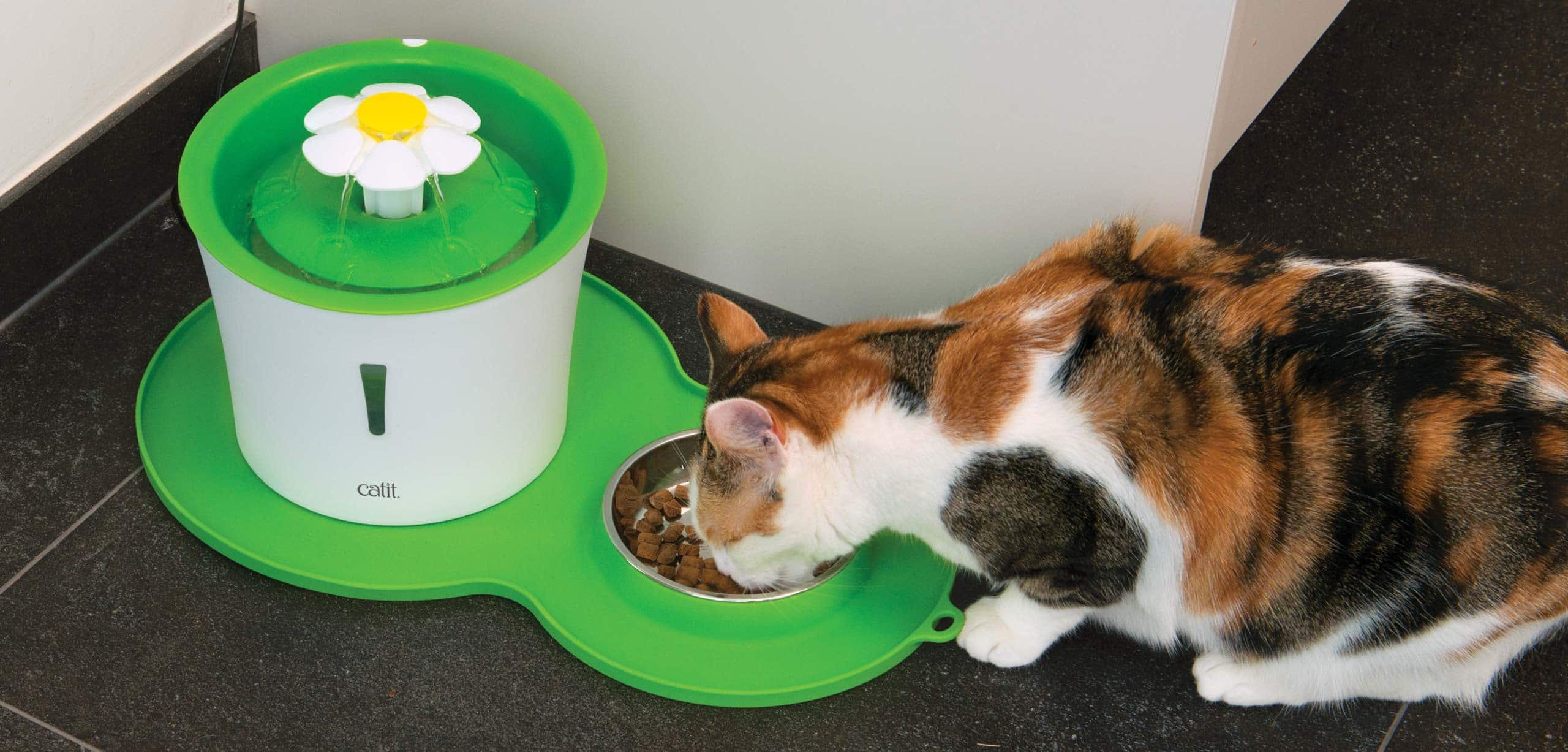 pixi eating from a peanut placemat with a flower fountain