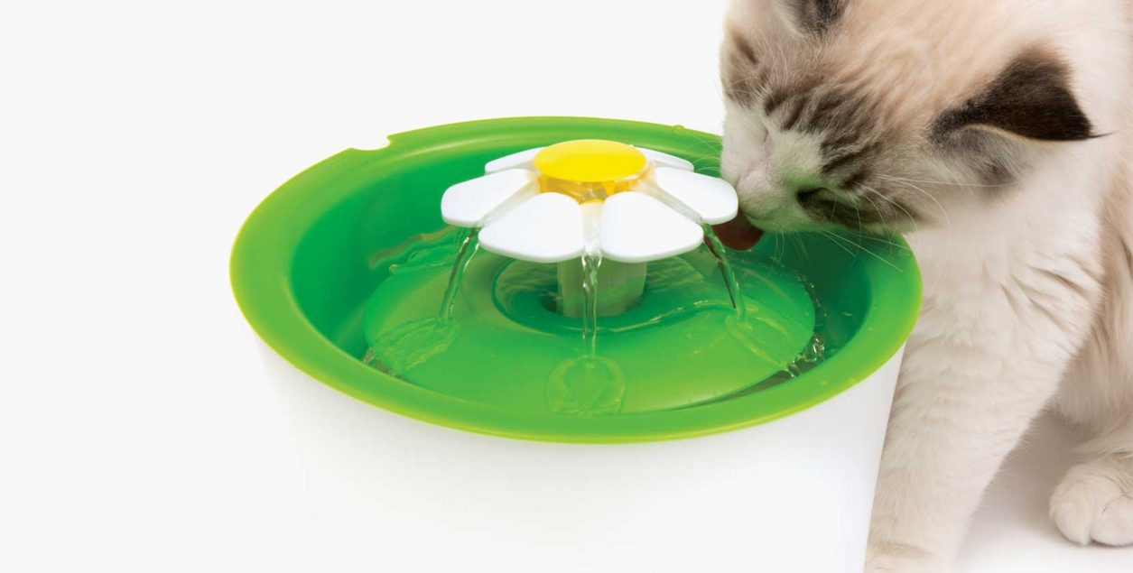 cat drinking from flower fountain