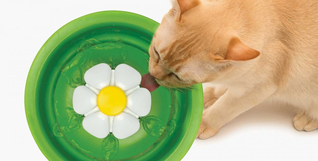 ginger cat drinking from flower fountain