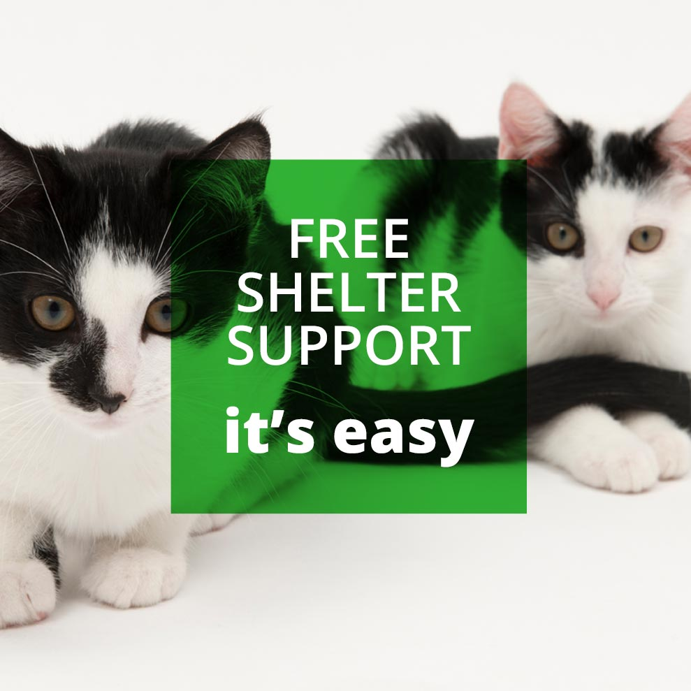 cute cats looking at you for shelter support