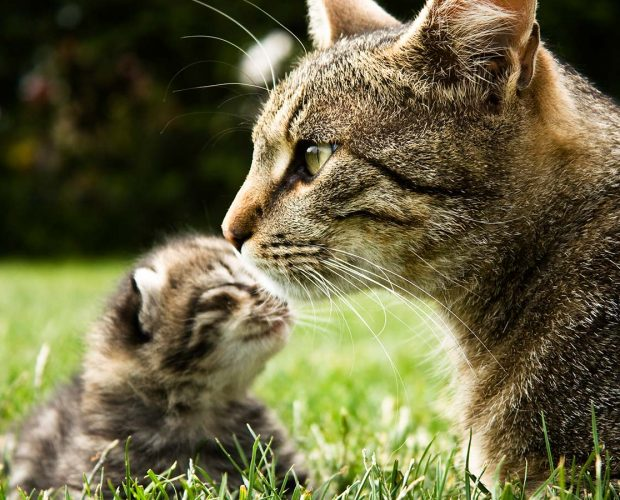 Mother cat with kitten in the grass
