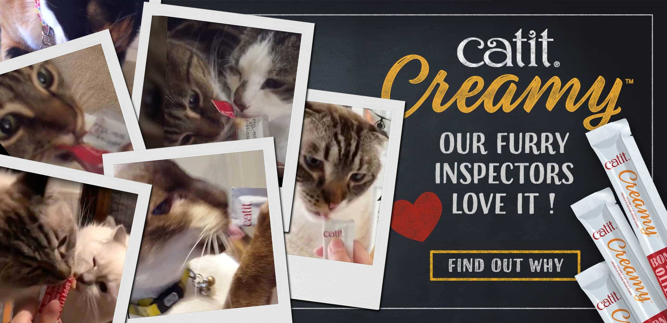 Catit Creamy - our furry inspectors love it - find out why