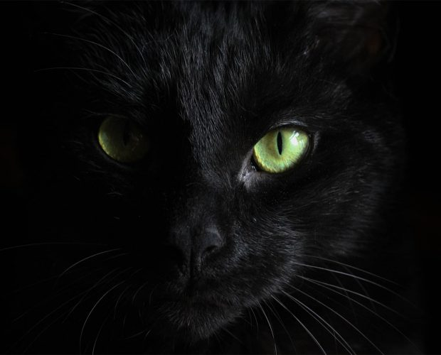 Black cats are considered bad luck