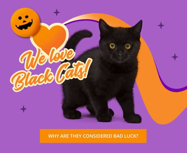 Why are black cats considered bad luck