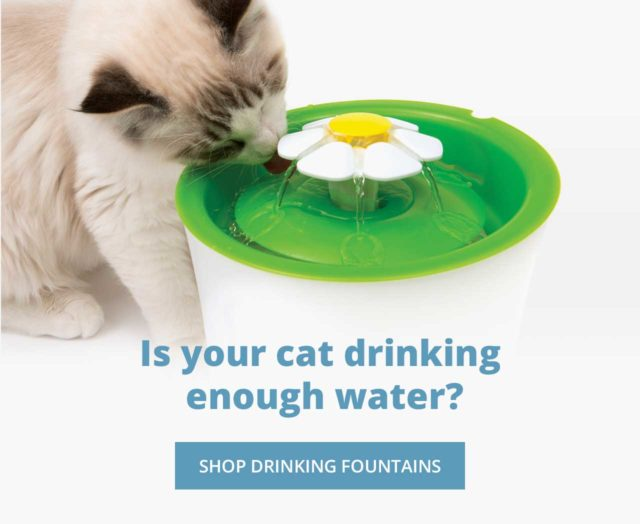 Is your cat drinking enough water_ Get your drinking fountain today