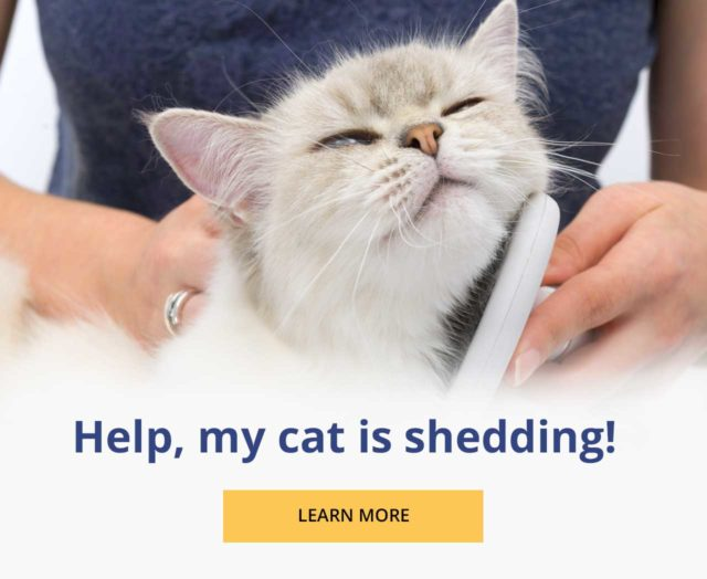 Help, my cat is shedding - learn more - geel