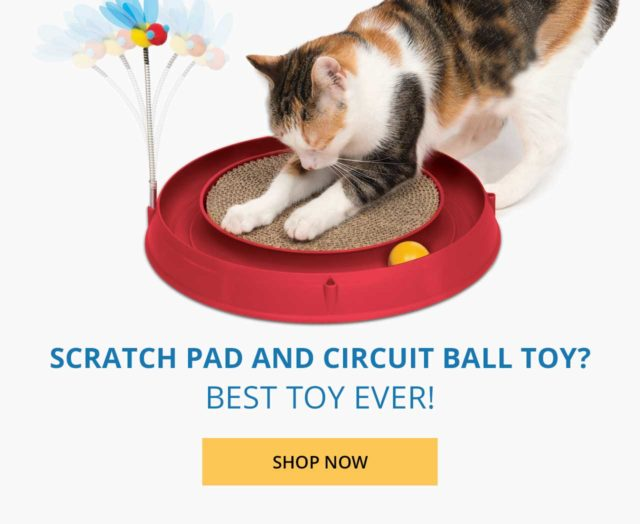 Scratch pad and circuit ball toy - shop now