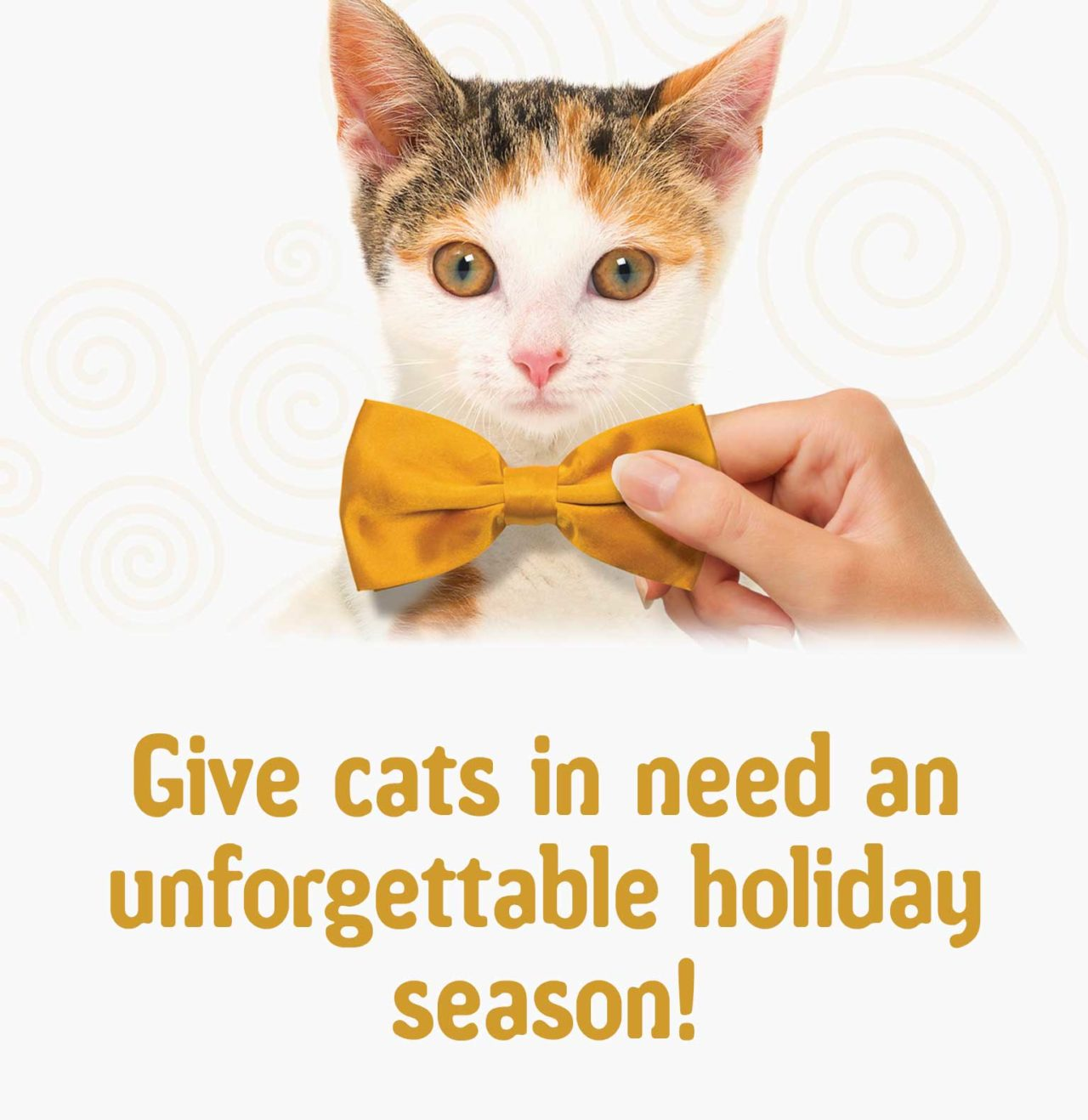 Give cats in need an unforgettable holiday season