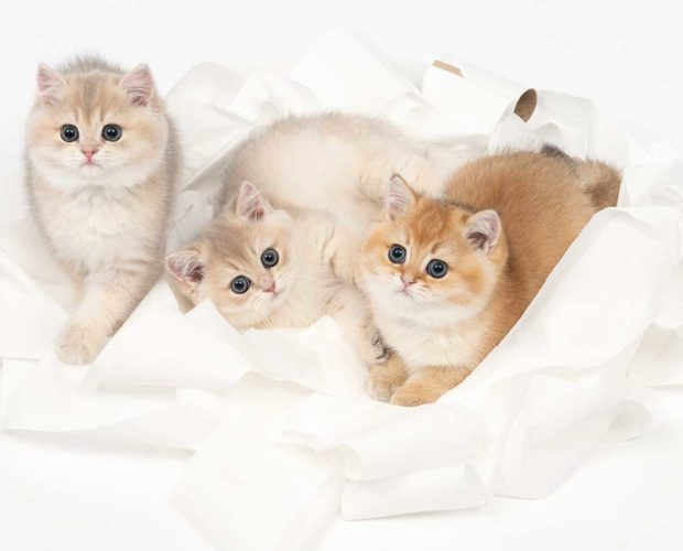 The kitten room - blog