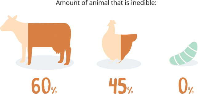Graphic showing that 0% of the grub is inedible compared to chicken (45%) and beef (60%)